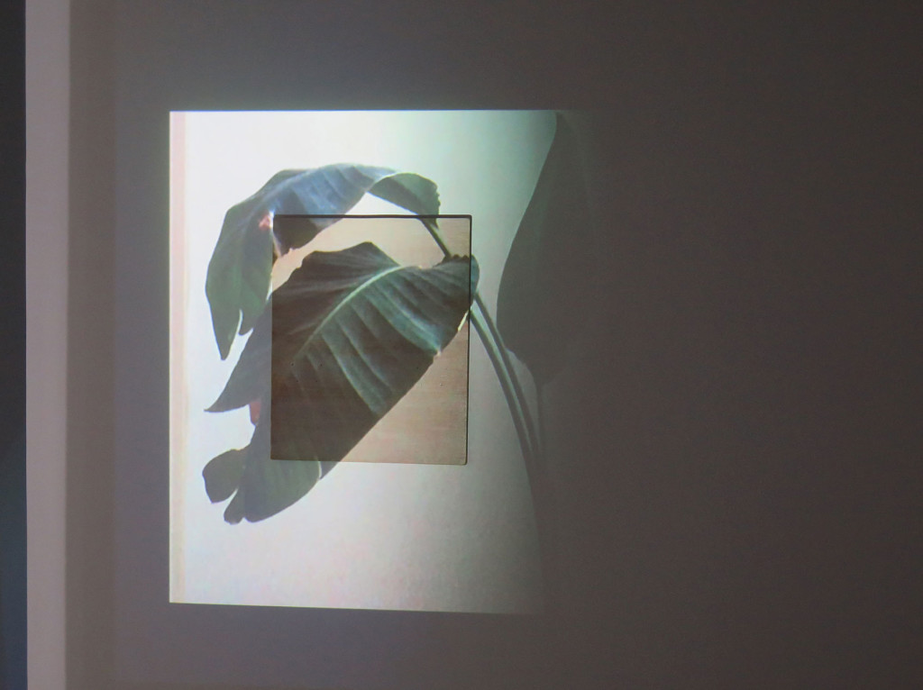 26-Lee-Kit_I-didn't-know-that-I-was-dead_installation-view_Leaf-projection_Copyright-the-artist-and-mother's-tankstation