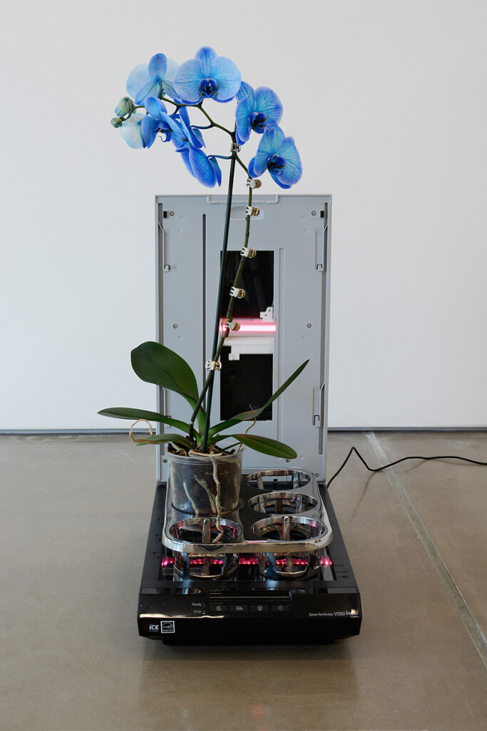 4a.-Parker-Ito_PPP_tray_Installation-view_Copyright-the-artist-and-mother's-tankstation-limited