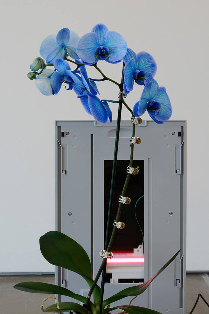 5a.-Parker-Ito_PPP_tray_detail_Orchid_Copyright-the-artist-and-mother's-tankstation-limited